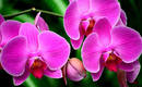 6 распространенных ошибок при выращивании орхидей