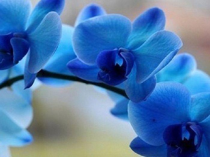 фото: botanichka.ru