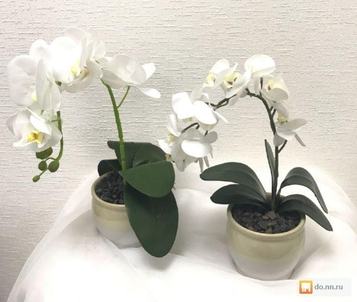 botanichka.ru