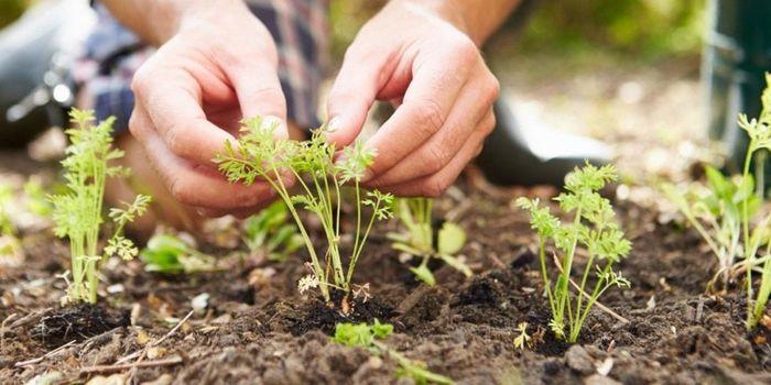 Уход за садом. Источник фото: www.dom-v-sadu.ru