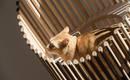 Экстравагантный кошачий дом для домашнего любимца
