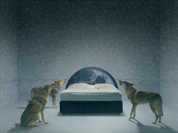 Коллекция кроватей «Сказки PerDormire». Дизайн: Фабио Новембре