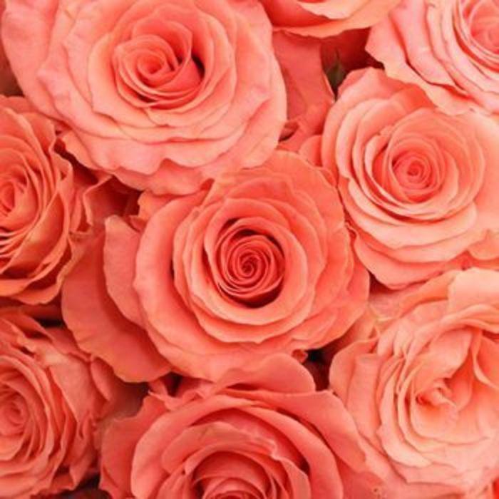Источник фото: Pantone.com