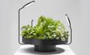 Как в природе: кашпо для растений с собственным источником света