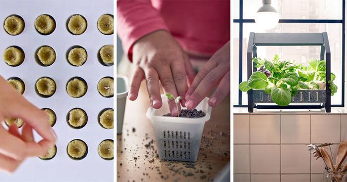 Серия KRYDDA / VÄXER, серия IKEA для внутреннего садоводства
