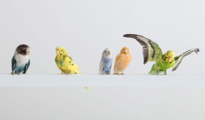 Люстра с птицами. Автор: Себастьян ЭрраЗуриз в R & Company. Фото: Джо Крамм