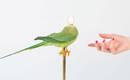 Красота новой роскоши: хрустальная люстра со 100 красочными птицами