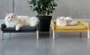 Комфорт для любимых: очаровательная мебель для котов
