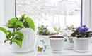 Как ухаживать за растениями зимой