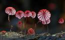 Фантастические грибы: потрясающее визуальное разнообразие