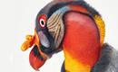 Необычные и исчезающие птицы на фото Тима Флэка