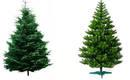Что лучше: натуральная или искусственная елка?