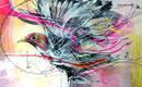 Неистовые птицы на бразильских граффити