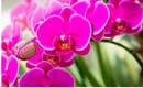 Вы выращиваете орхидеи? Узнайте, как ухаживать за ними