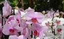 Кто-то знает об этом действии орхидей? А жаль - их надо держать в каждом доме