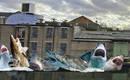 Акулы! Шесть модельных хищников в центре Лондона