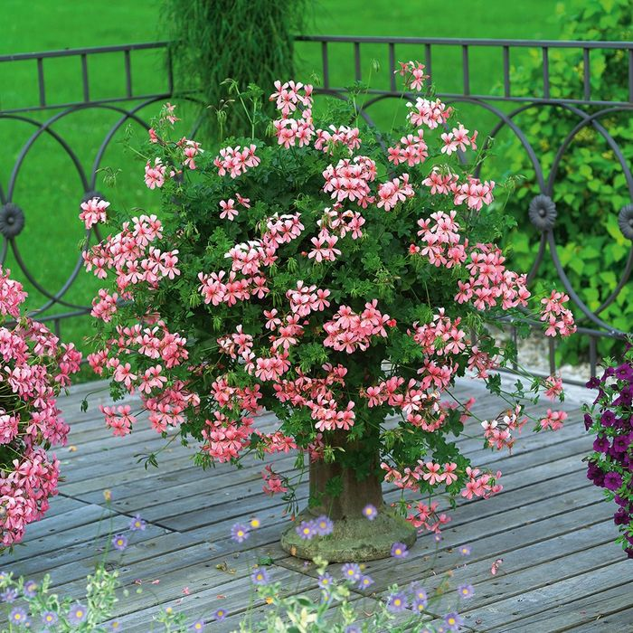 Источник фото: http://www.vashsad.ua/plants/room_plants/about_flowers/care/show/9737/