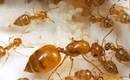 3 простых совета для борьбы с муравьями на кухне