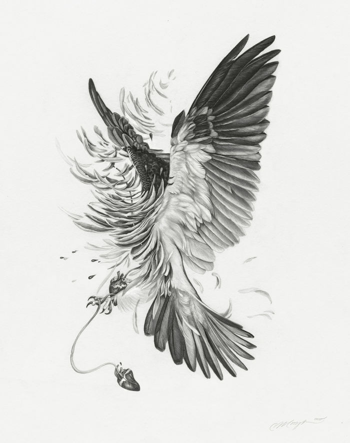 Птицы в рисунках Кристины Мрозик (Christina Mrozik)