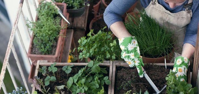 Огород и сад на балконе