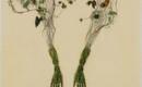 Растения, встроенные в восковой росток из хрупких рук