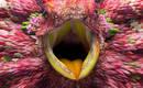 Фантастические птицы с лепестками цветов вместо оперенья
