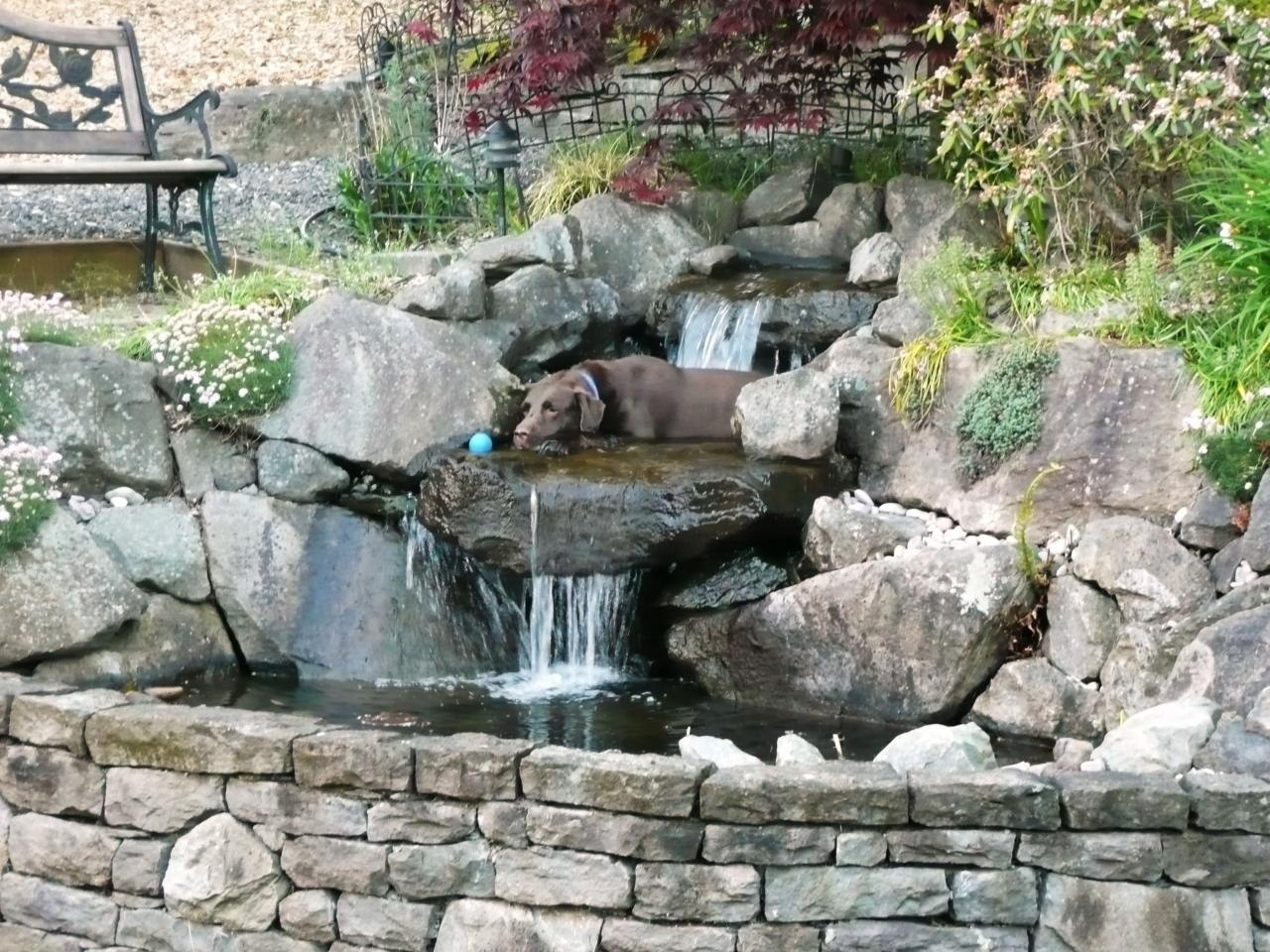 fabulous-small-backyard-pond-ideas-mixed-with-waterfall-and-rock-adge-arrangement-also-lush-vegetation-plus-iron-chair_01.