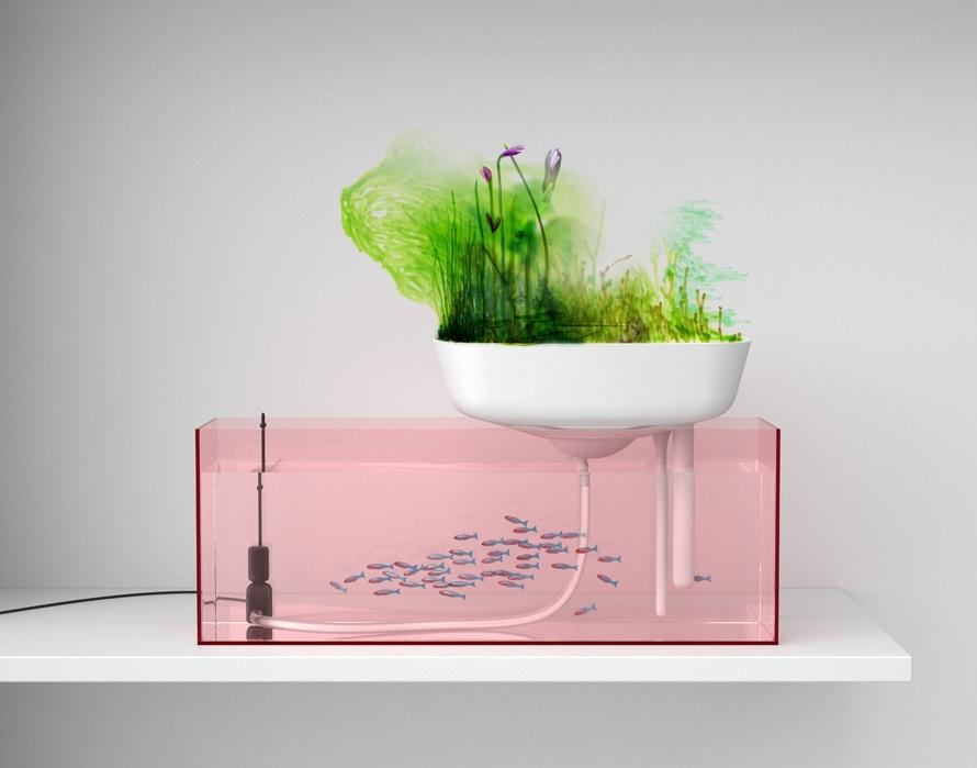 aquariumrose_web
