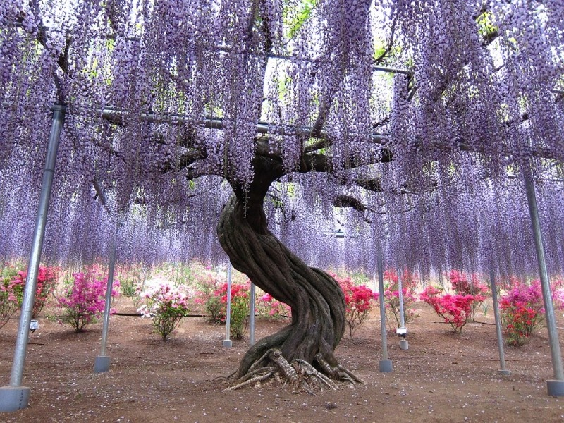 4-kawachi_fuji_garden_01