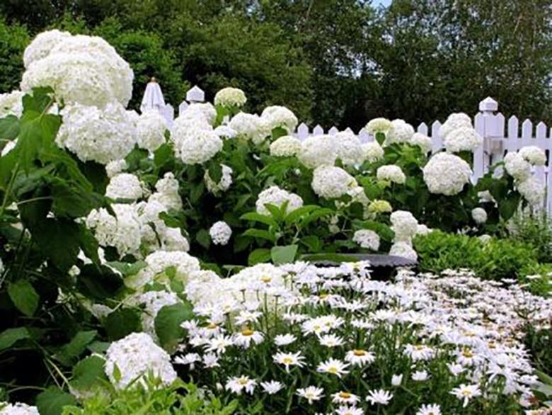 white-garden-6