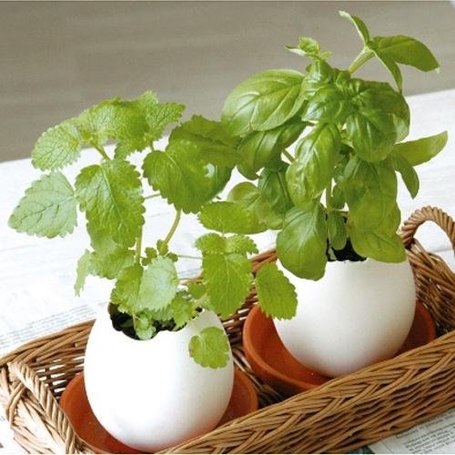 eco-e-garden-flowers-will-bloom-egg-egg-diy-birthday-font-b-gift-b-font-font_01