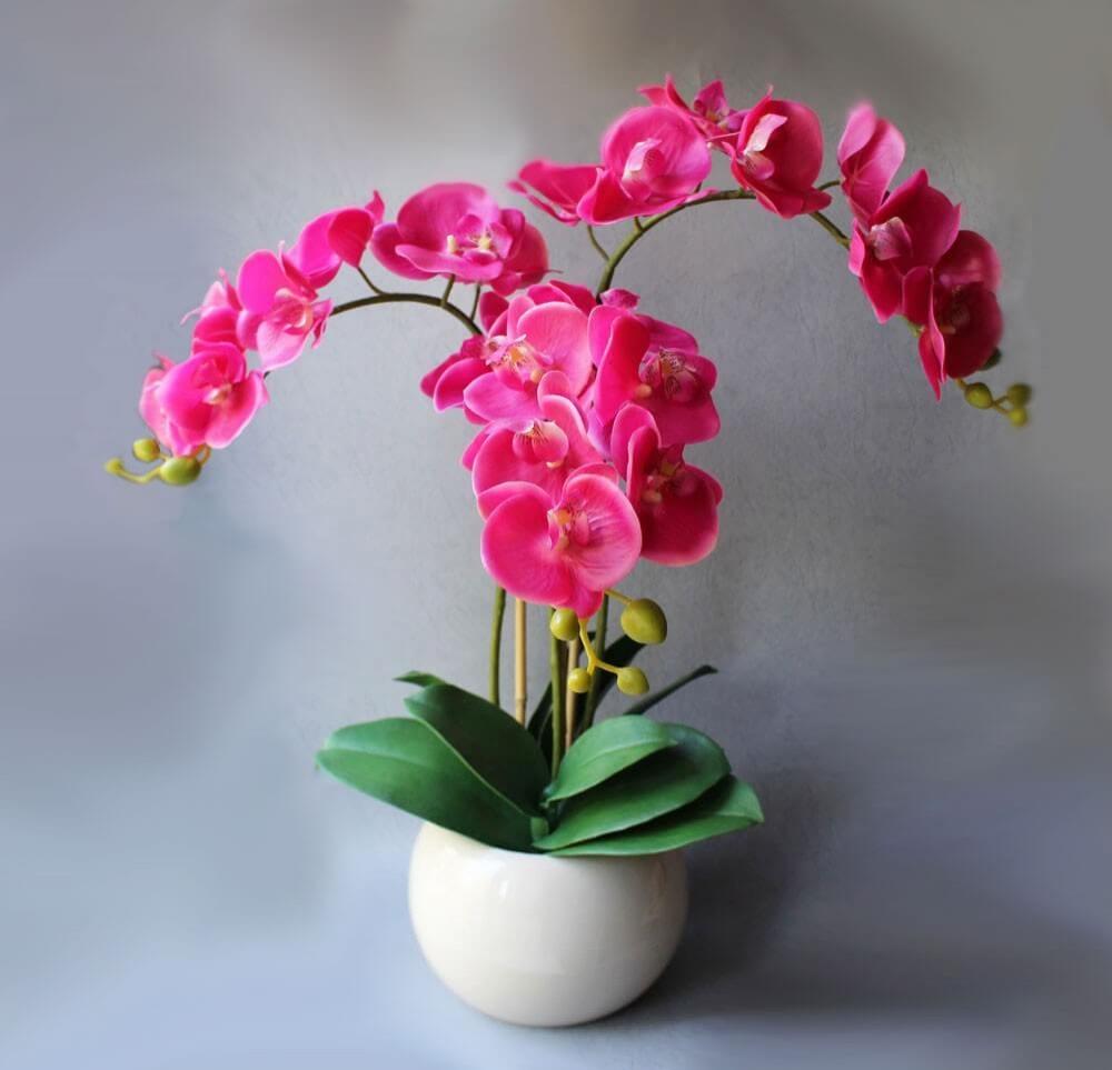 Красивая розовая орхидея фаленопсис в небольшом белом горшке