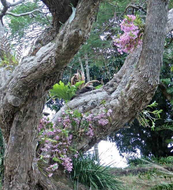 Фото орхидей, растущих на дереве