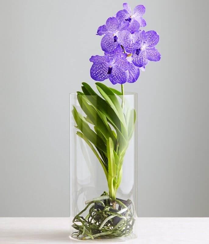 Выбор саженцев для выращивания орхидеи Ванда