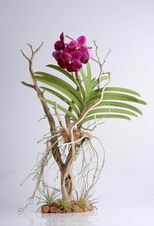 Подкормка для орхидеи