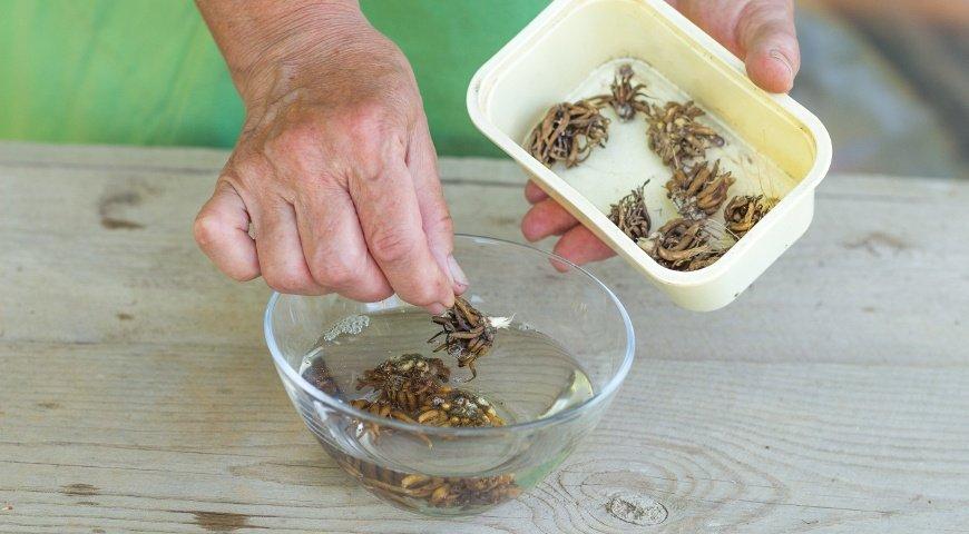 Фото посадки ранункулюса клубнями - 3