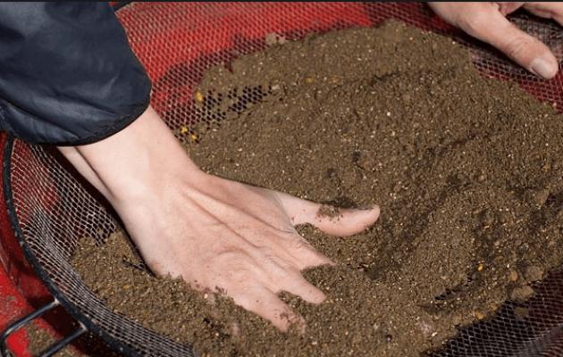 Фото инструкция посадки ранункулюса - 3