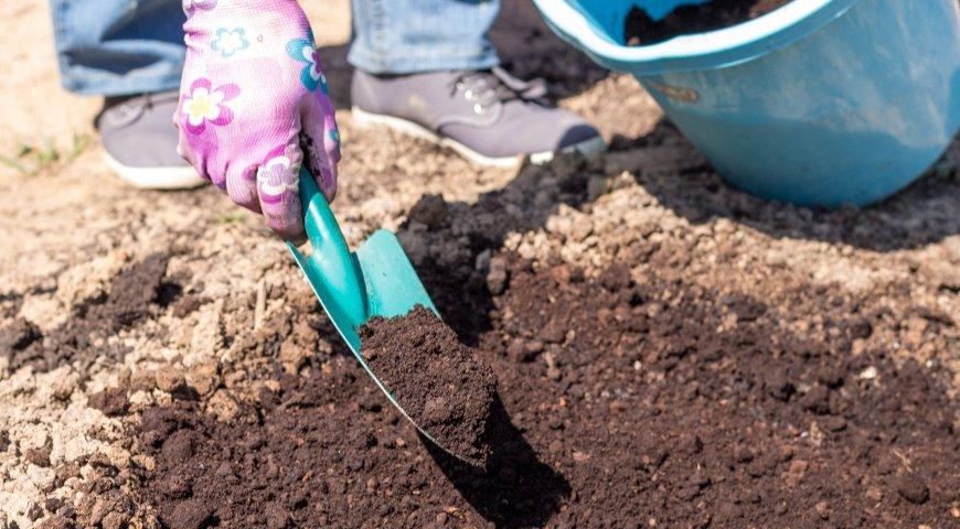 Фото инструкция посадки ранункулюса - 5