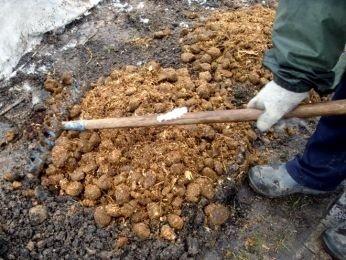 Мульчирование почвы для розы