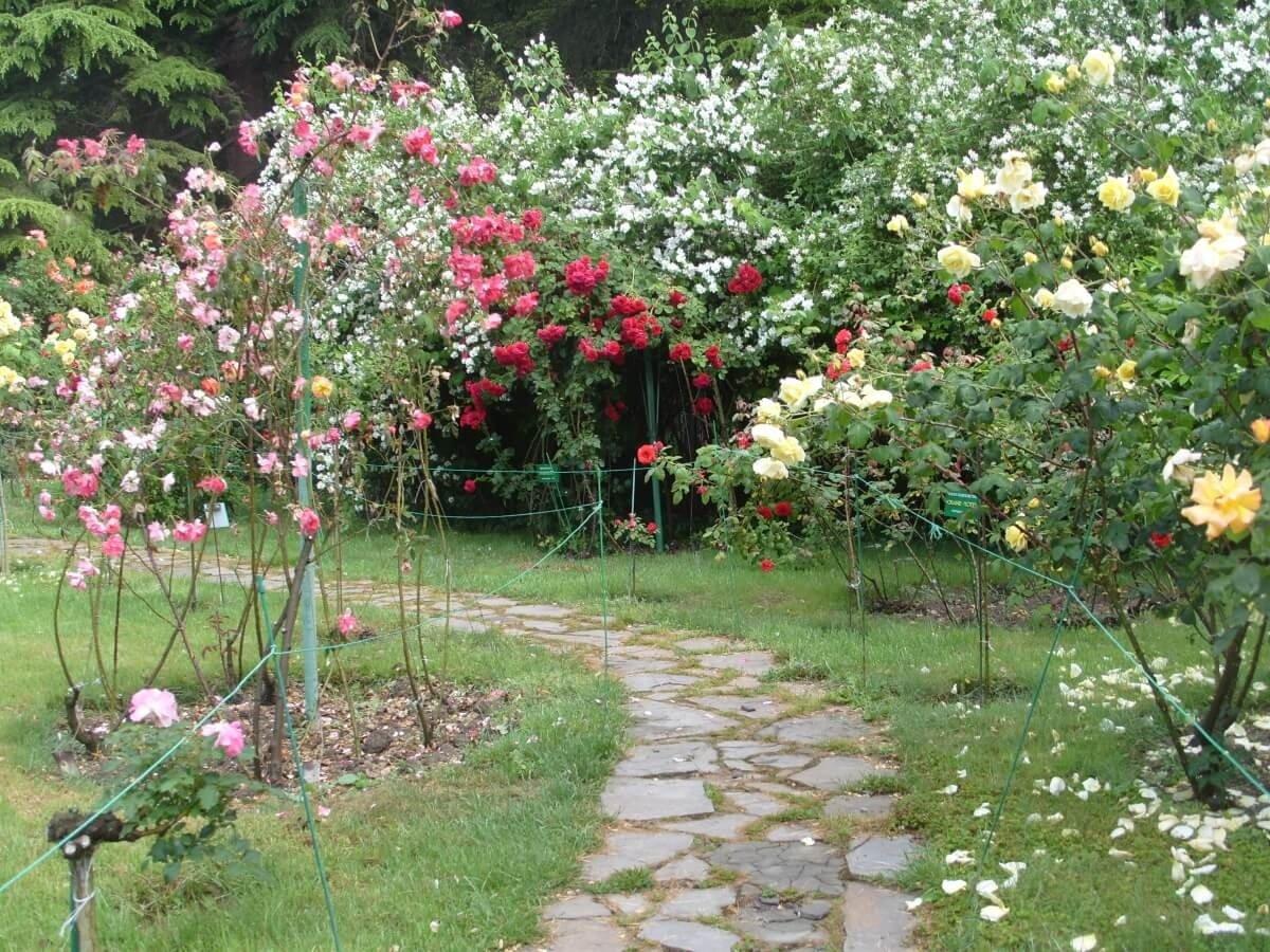 Фото роз в осеннее время на дачном участке
