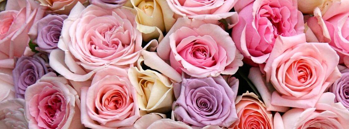 Фото красивых роз, посаженных осенью