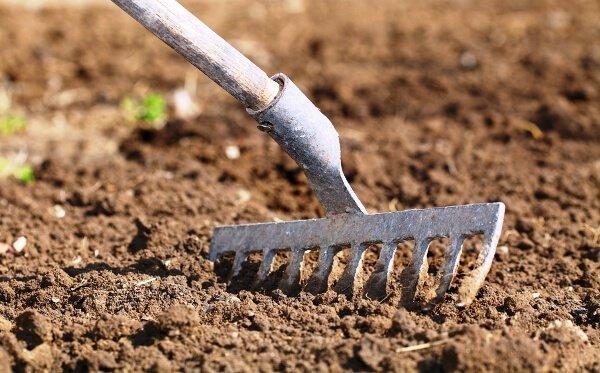 Фото суглинистой почвы