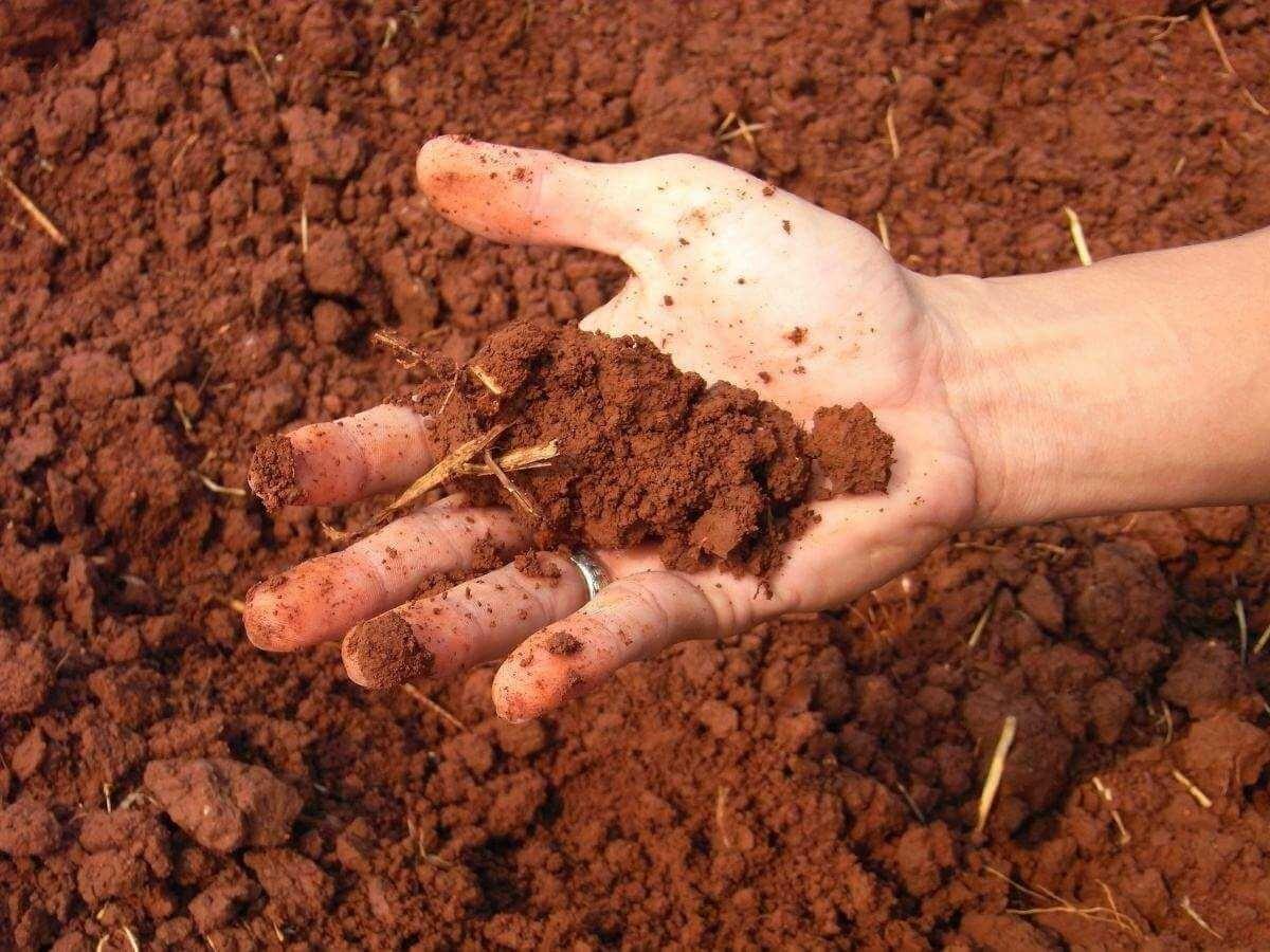 Фото глинистой почвы