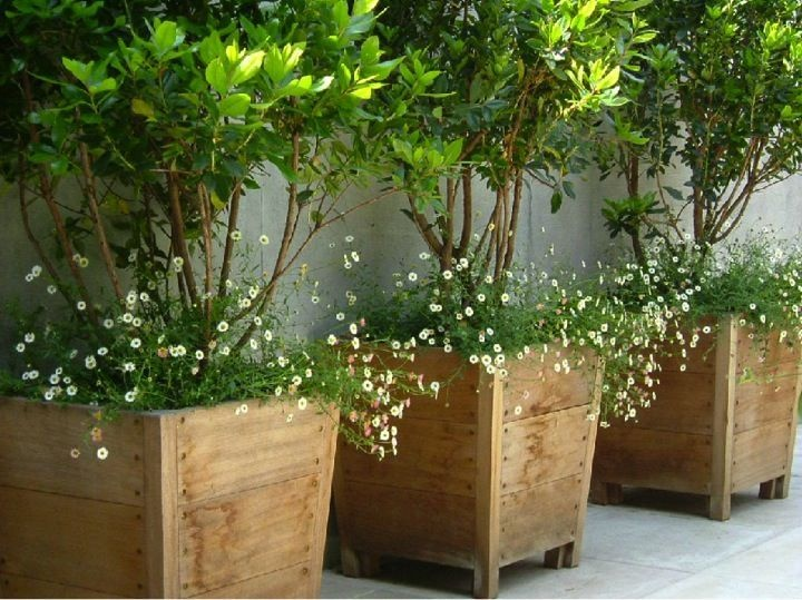 80797be1b4b9915b8b89eae73ad2fa4e--outdoor-potted-plants-pots-for-plants
