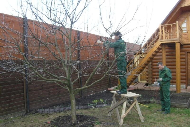 Процесс обрезания дерева весной