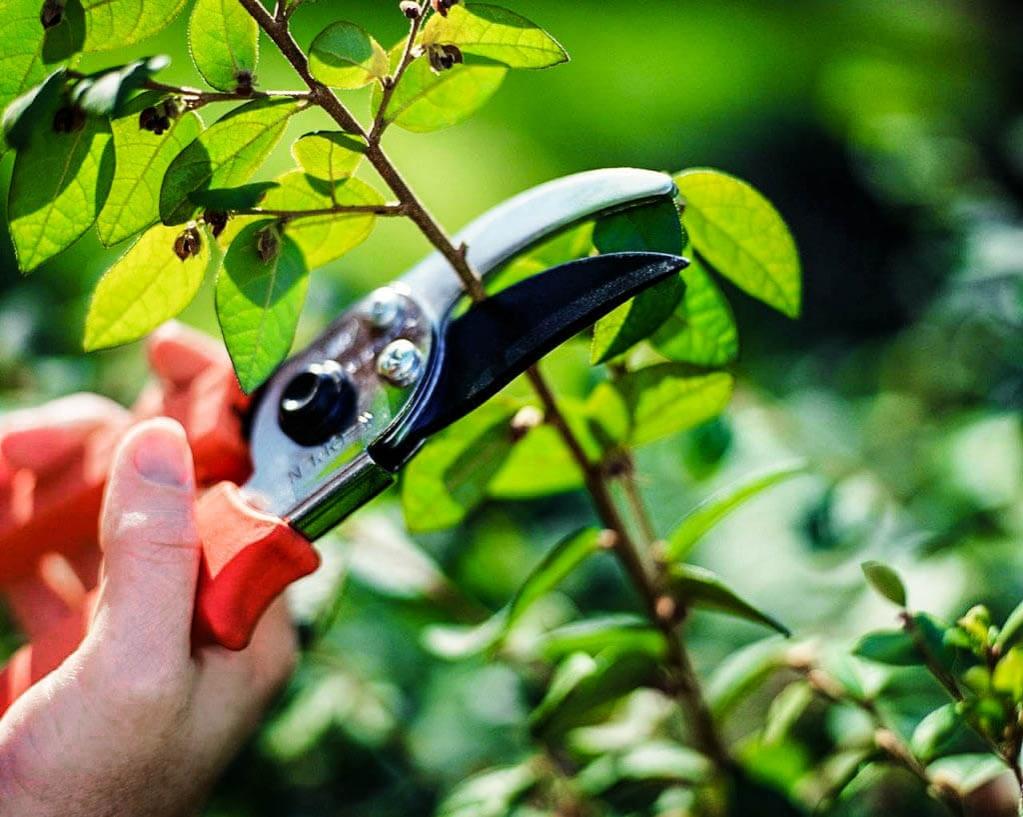 Фото обрезки молодого дерева садовыми ножницами