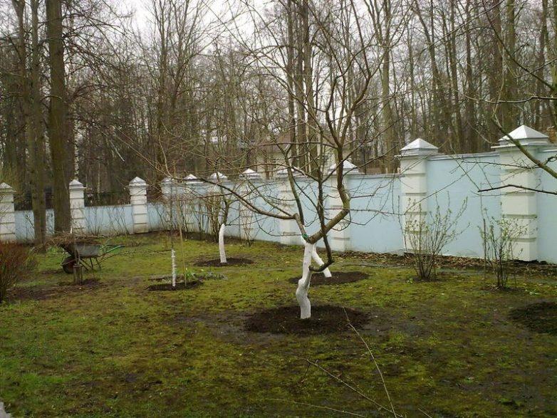 Правильно обрезанные деревья
