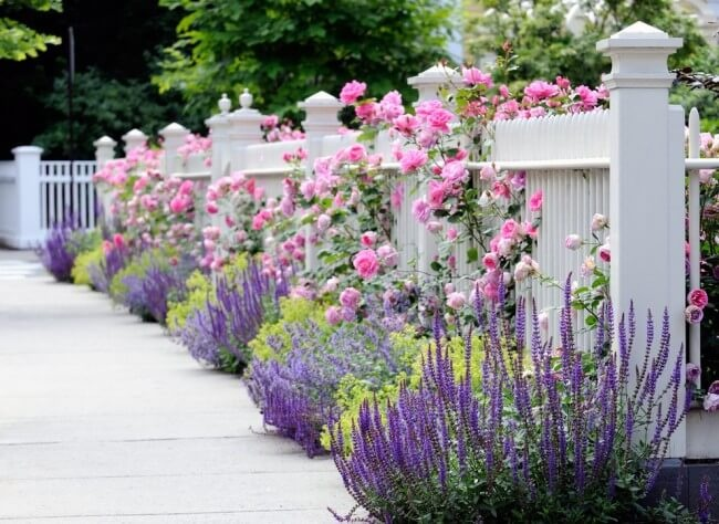 Фото клумбы из розовых цветов около белого забора