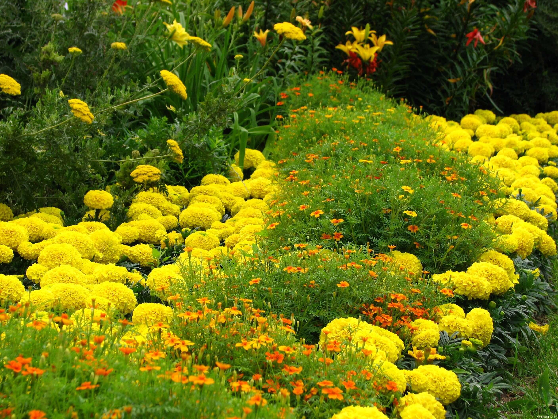 Фото желто-оранжевой клумбы