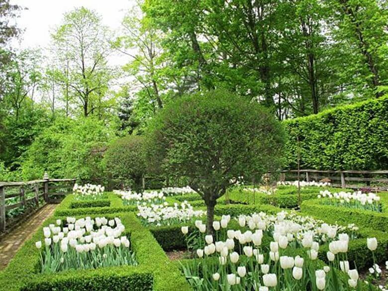 Фото клумбы из белых цветов